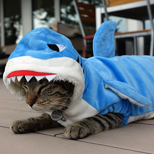 Katzenkostüm Hai