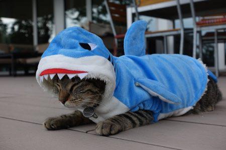 Haikostüm für Katzen