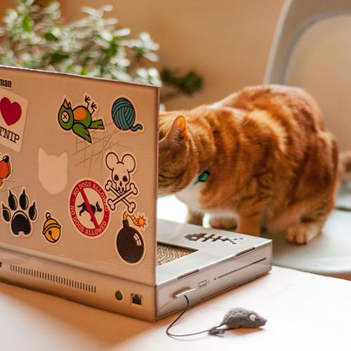 Katzen Kratzbaum Laptop