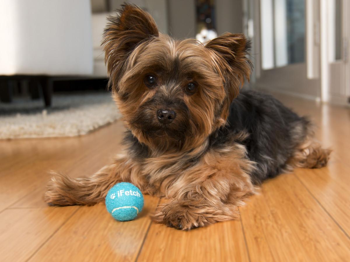 Ballmaschine für Hunde. Apportiergerät