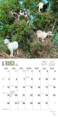 Ziegen in Bäumen Kalender 2017