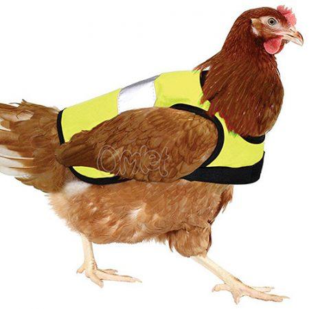Warnschutzweste für Hühner