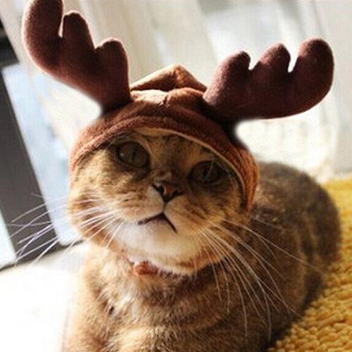 Katzenkostüm Rentier - Tierkostüm für Katzen