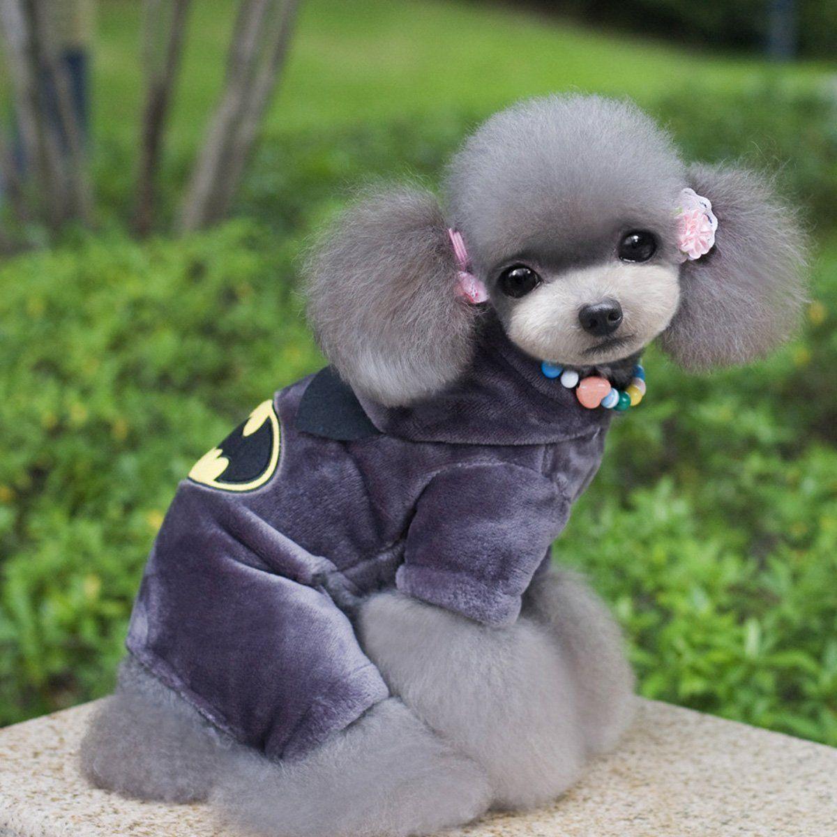 Hundekostüm Batman mit bezauberndem Hund von der Seite